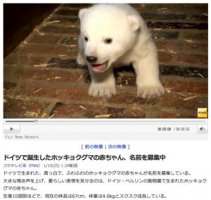 ドイツで誕生したホッキョクグマの赤ちゃん、名前を募集中